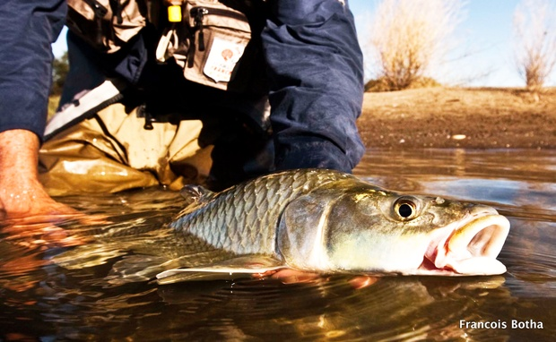 fly-fishing with dry fly on the orange river